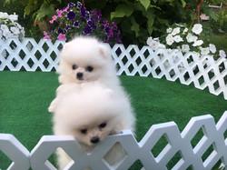 Kinder and Daisy