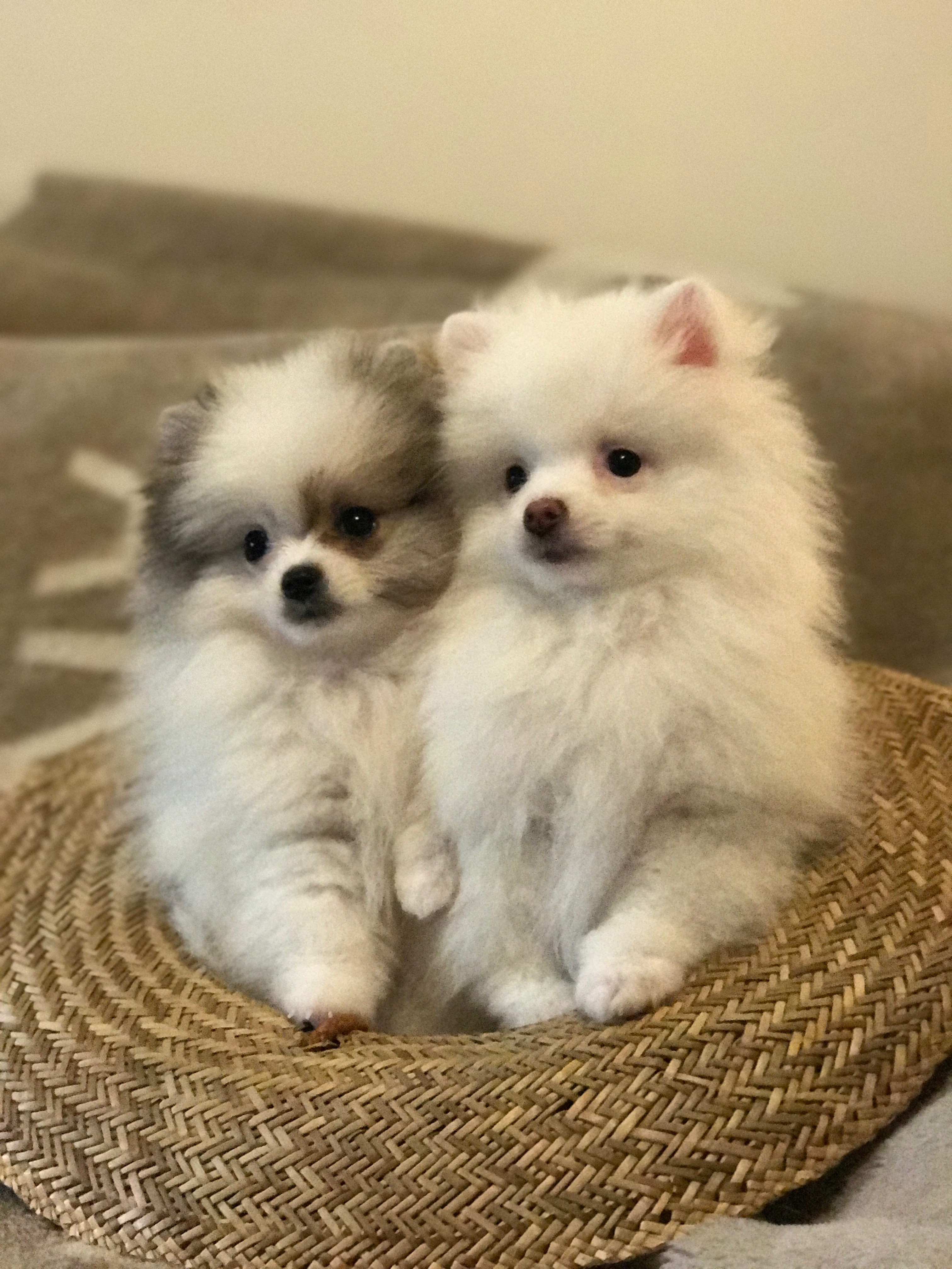 Toby and Luna
