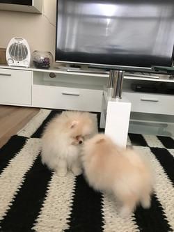Bella and Boo