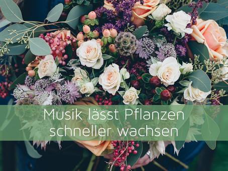 Musik lässt Pflanzen schneller wachsen
