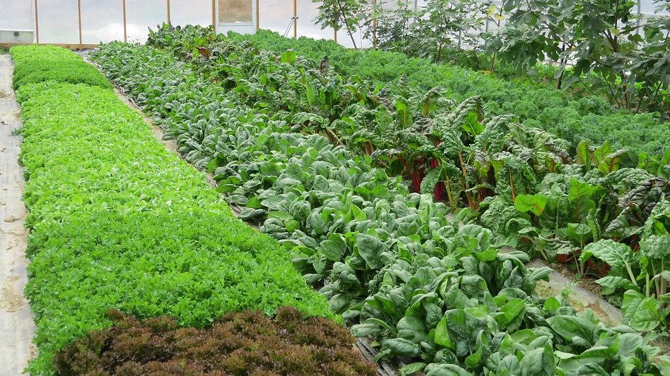 Market Farming.jpg
