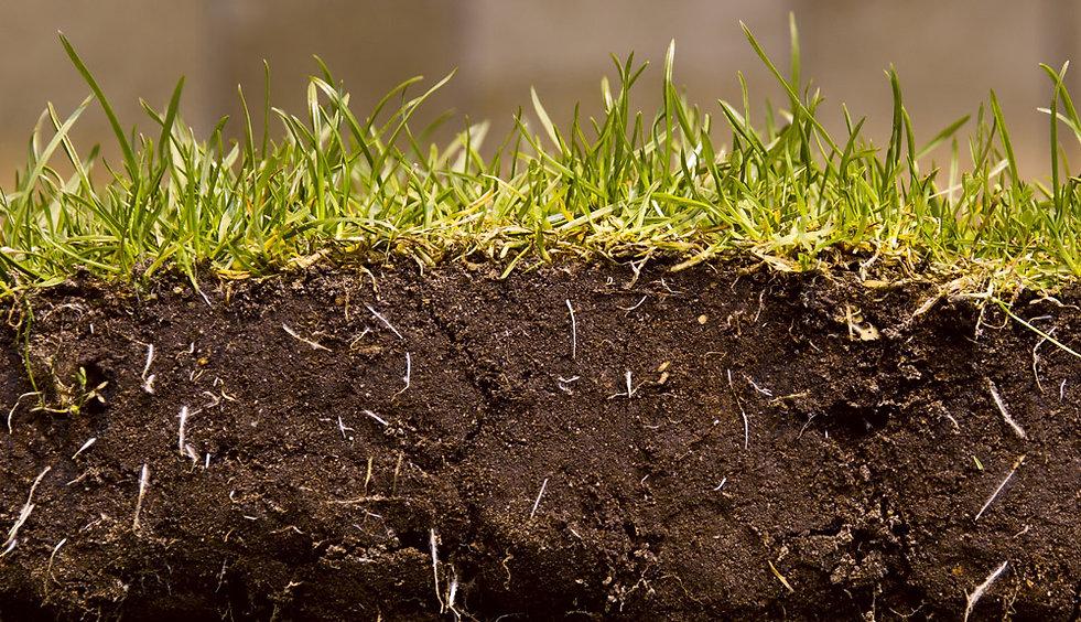 soil-news.jpg