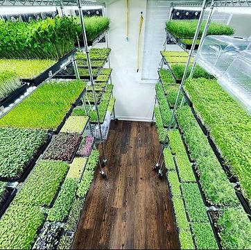 bootstrap farmer growroom.jpeg