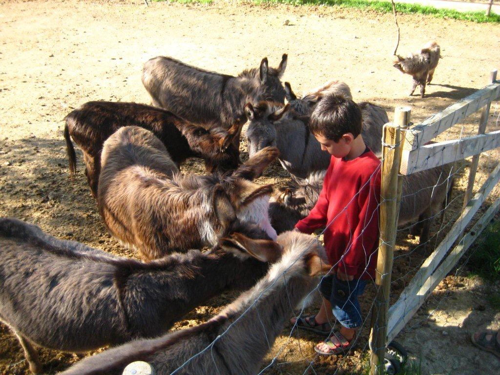 Les ânes miniatures du varon