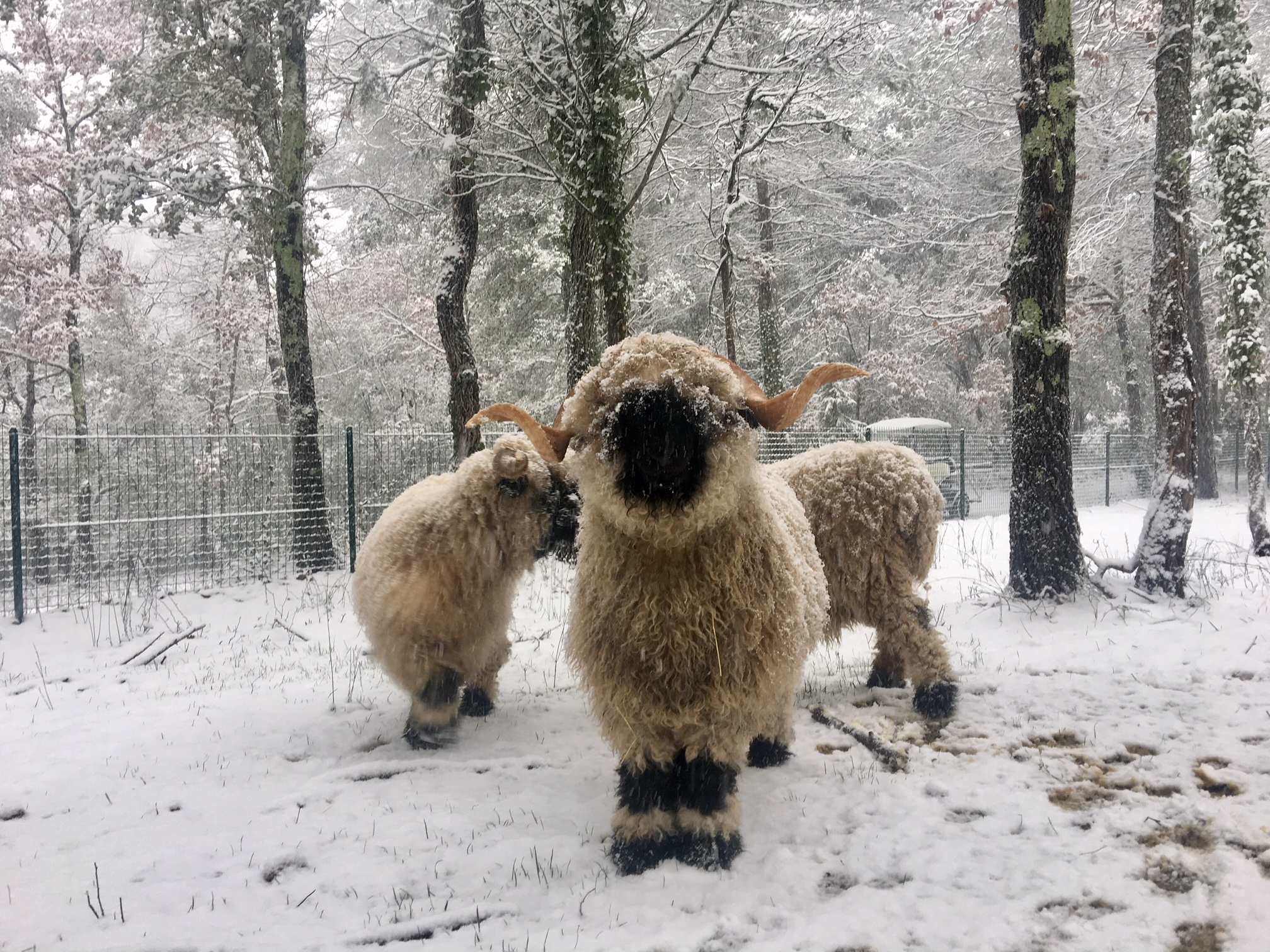 sous la neige 4