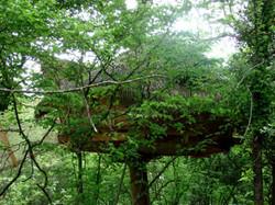 Blottie-dans-les-arbres-du-Varon.jpg