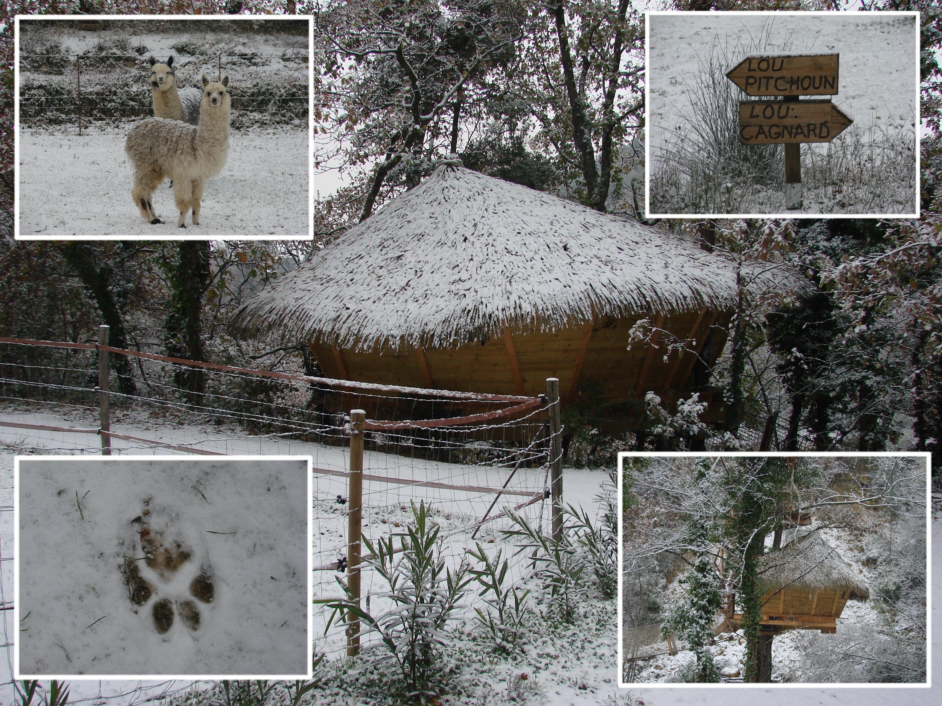 Varon-Lou-Cagnard-dans-la-neige