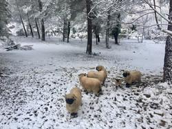 sous la neige 3