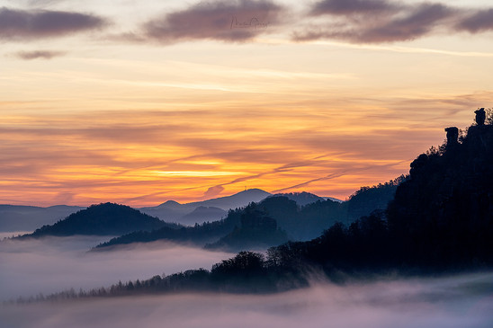 Morningglory