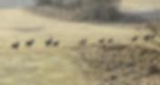 Bildschirmfoto 2020-03-17 um 13.00.22.pn