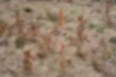 Bildschirmfoto 2020-03-10 um 09.46.37.pn