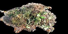 poids déchets verts