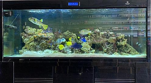 Tropical Fishtank Bromley Vape
