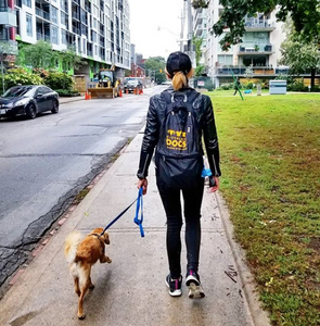 Puppy visit Toronto Services - City Place Dogs