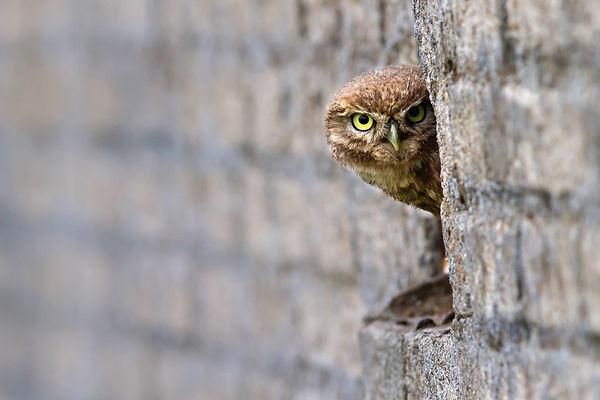 owl-5677910_1920.jpg