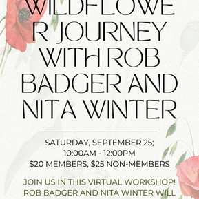 LA Arboretum: Join Us For A GORGEOUS Presentation Of Wildflowers!
