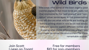 2021 S/F Turning Your Garden into a Haven for Wild Birds