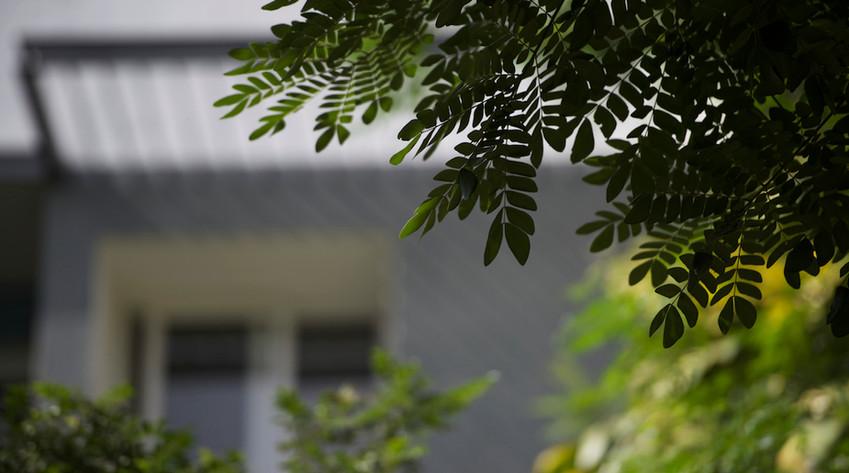 Spectra Raintree