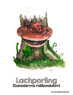 Lachporling.jpg