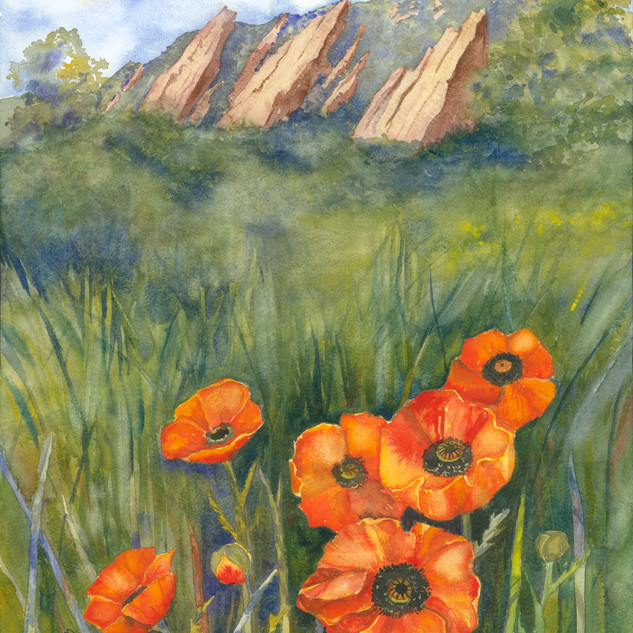 Flatiron Poppies