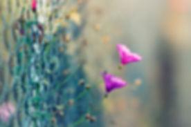 beautiful-bloom-blooming-108303.jpg