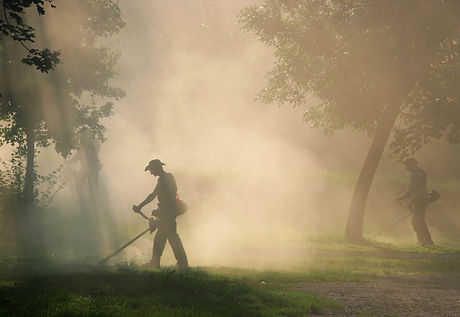Workers cut the grass with strimmer in dust.jpg