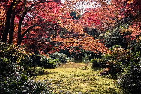 pexels-satoshi-hirayama-3285471.jpg