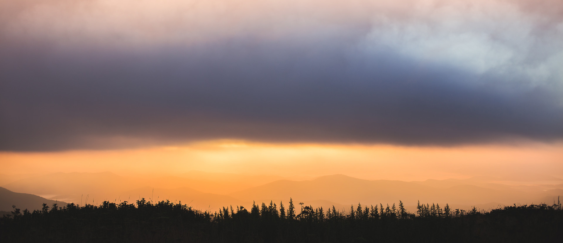 Black Balsm Sunrise