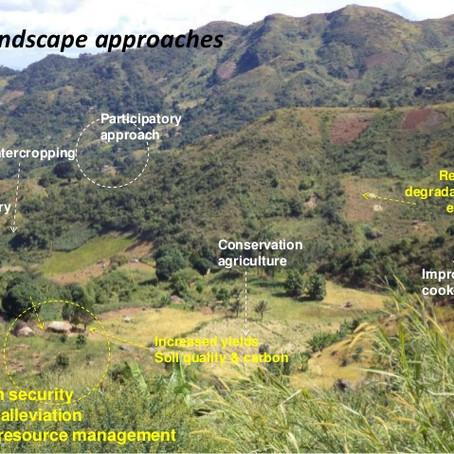 Landscape GreenBonds:An emerging new asset class?