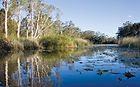 Glamping Byron Bay, Glamping Far North Queensland,