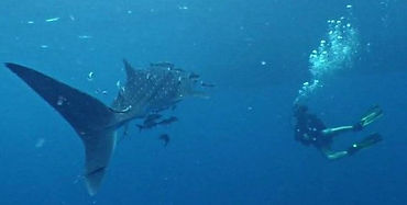 Glamping and Scuba Diving Cairns.