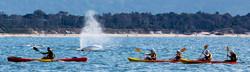 Breezy Belle Adventures, Glamping Cairns, Camping Cairns, FNQ.amping Cairns, SUP, Stand up paddle ca