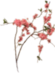 Mary Zimbalist : Home Page : Branch with Pink Flowers