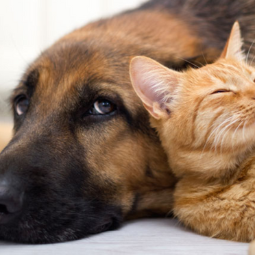 Pets Allowed in NSW Apartments After a New Ruling Relating to By-Laws