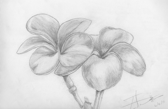 FLOWERS | 2011