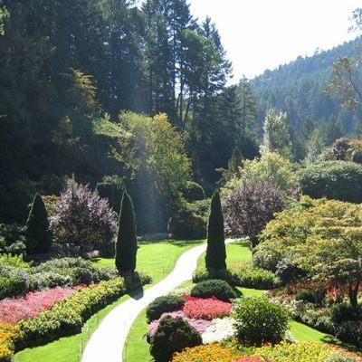 Garden pic 1.jpg