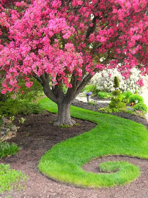 tree and path.jpg