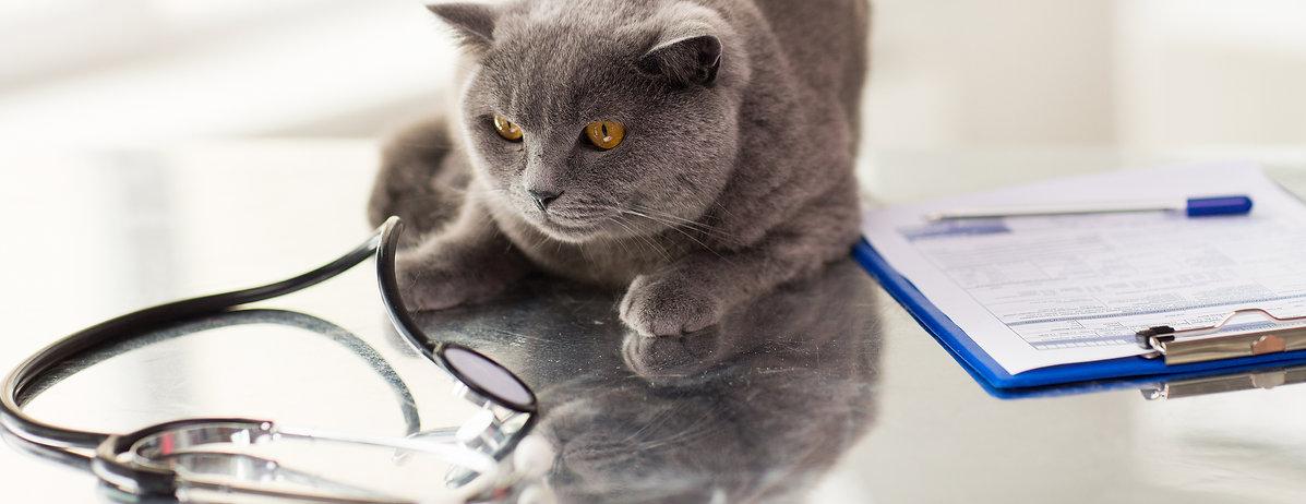 cat, logo, main toolbar