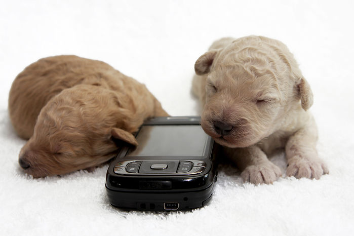 Dog on a Mobile Phone