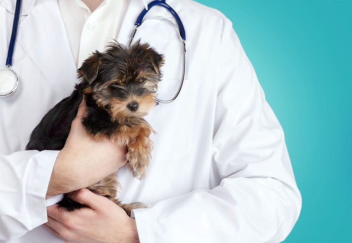 Vet holding a puppy