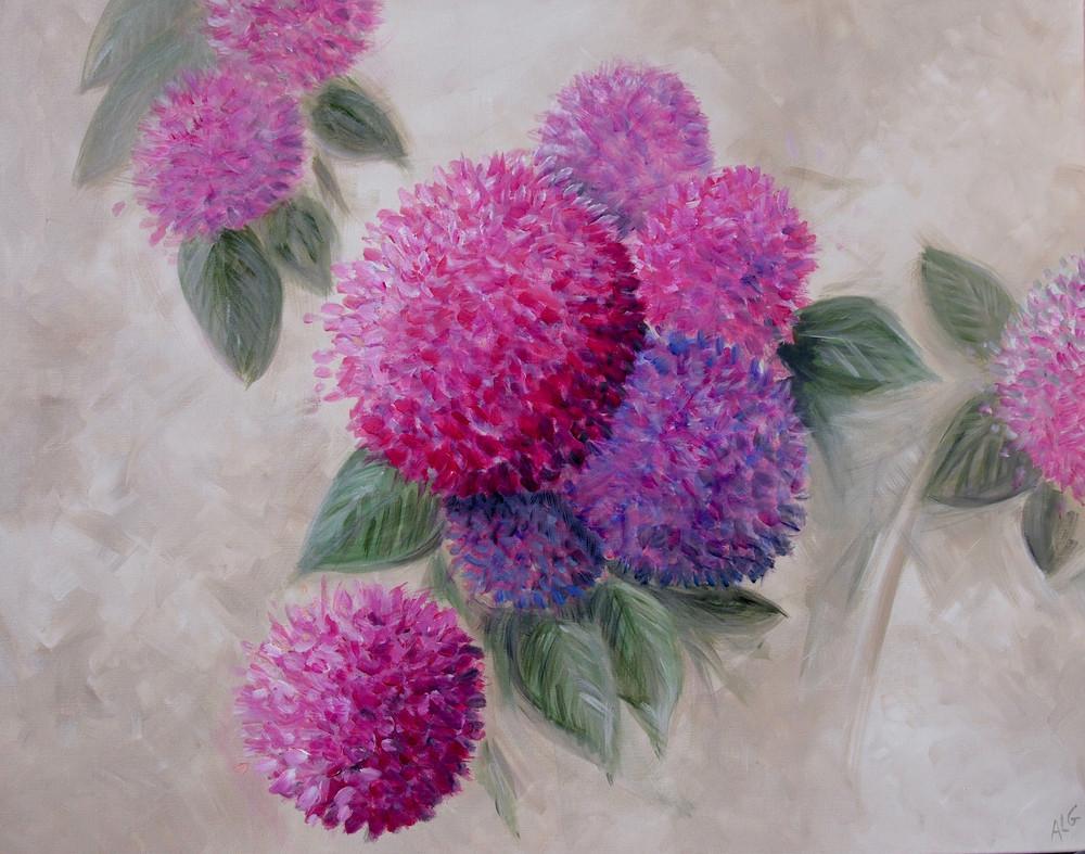 Hortensias roses et violets