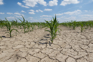 All Top U.S. Corn Growing States Under Intensifying Drought Conditions