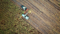 Overseas Harvested Grain and Oilseed Acreage Outpacing U.S.