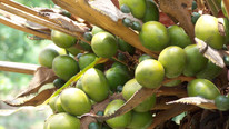 Malaysian Palm Oil Exports Slump to Lowest Since 2007