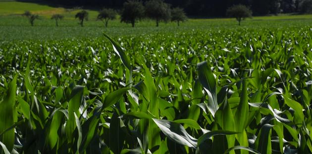 Cargill, ARASCO Partner to Build Corn Mill in Saudi Arabia