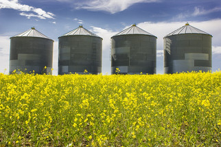Merit Opens First Facility in the World Able to Produce Food-Grade Canola Protein