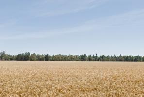 Grain Transportation Drives Record Profits for Canadian National Railway
