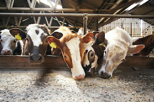 BinSentry Raises $7.7M to Help Feed Mills and Livestock Producers Manage Feed