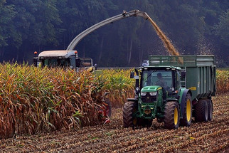 Mexico Bans Genetically Modified Corn, Glyphosate; Plans to Phase Out Imports