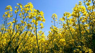 Bunge Acquires European Edible Oils Supplier